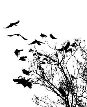 birdstree_stockxhnge