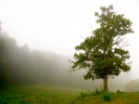 Lone Tree 1117616