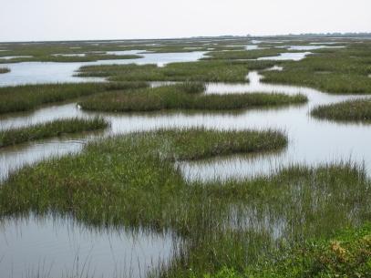 reitan-marsh5