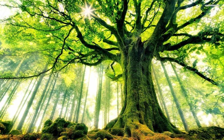 nature_big_tree_hd